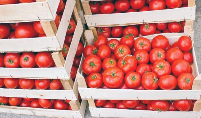 Хранение свежих помидор до самой зимы