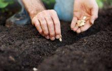 Когда сажать тыкву на рассаду в 2020 году по лунному календарю садовода и огородника: таблица благоприятных дней