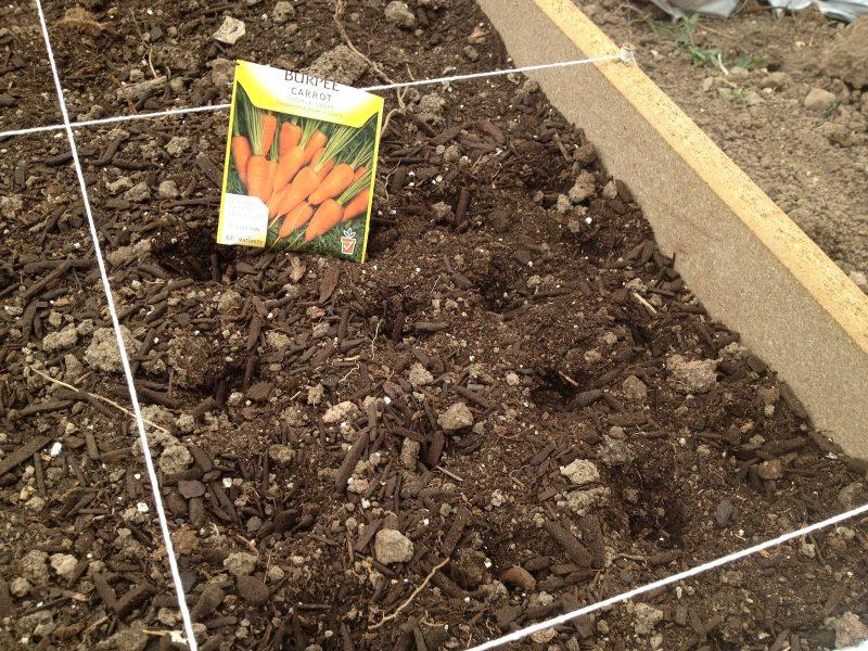 Когда сажать морковь весной в открытый грунт по лунному календарю в апреле 2020 года: таблица благоприятных дней