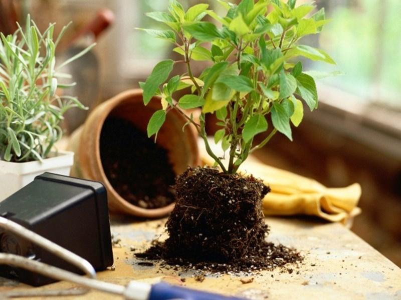 Благоприятные дни для полива комнатных растений