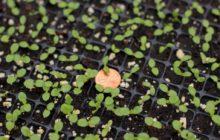Когда сажать клубнику семенами на рассаду в 2020 году: таблица благоприятных дней, полезные советы и частые ошибки