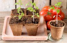 Благоприятные дни для посадки томатов в марте 2020 года по лунному посевному календарю садовода и огородника: таблица по фазам луны