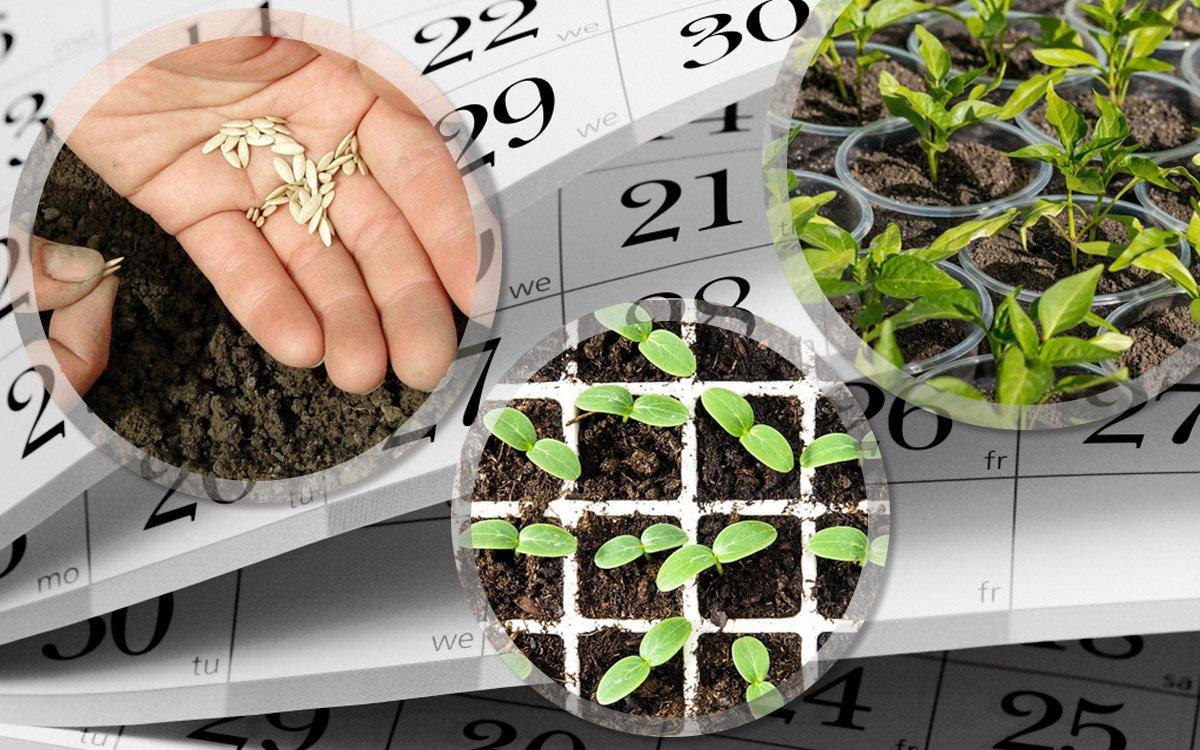 Посадочные дни в марте 2020 года: выбираем благоприятные дни для посева семенами на рассаду и пикирования