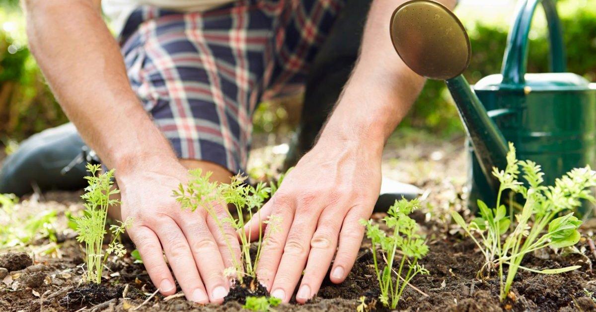 Лунный посевной календарь на май 2020 года для садовода и огородника: таблица благоприятных дней для посадки и ухода за садом