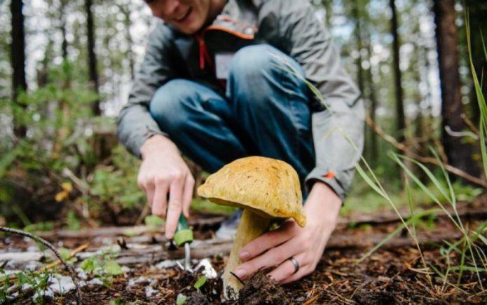 собирание грибов в лесу