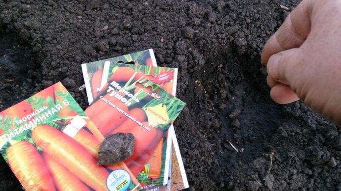 Благоприятные дни для посадки моркови в грядки в апреле 2021 года по луне