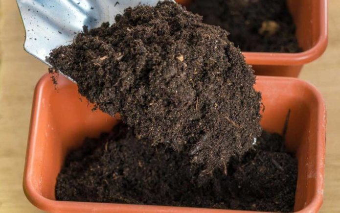 подготовка грунта для рассады перца