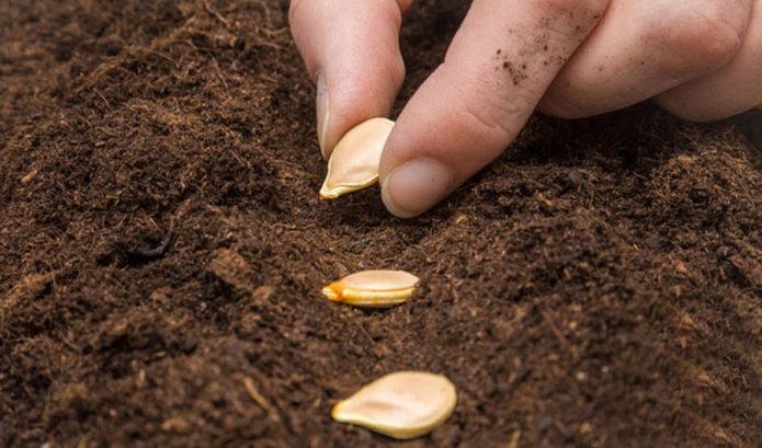Благоприятные дни для посева рассады кабачков в 2021 году по лунному календарю