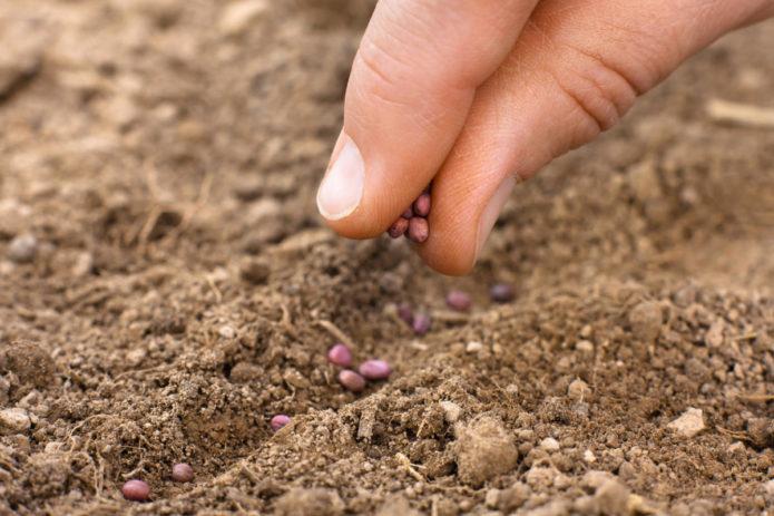 посев семян осенью