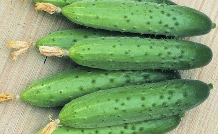 Выбираем лучшие сорта огурцов на 2021 год по описанию и региону выращиванию
