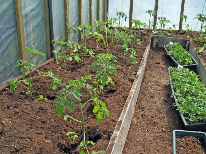 Лунный календарь на март для посадки томатов в 2021 году по луне