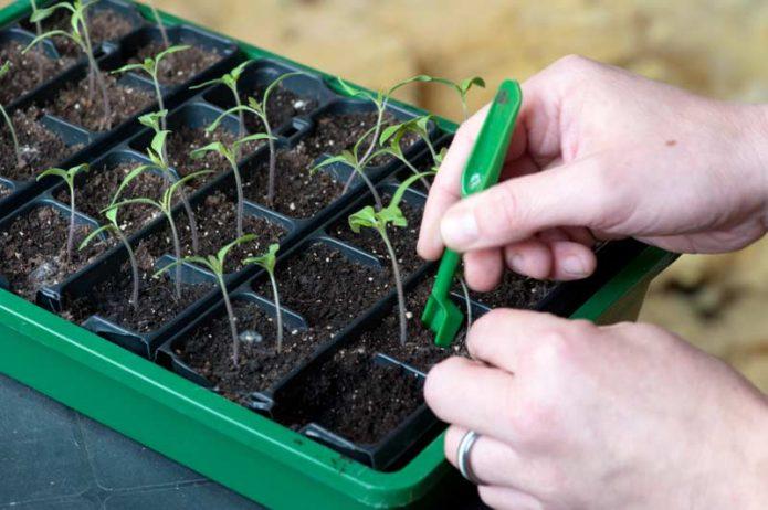 Лунный календарь на март для посадки томатов в 2020 году по луне