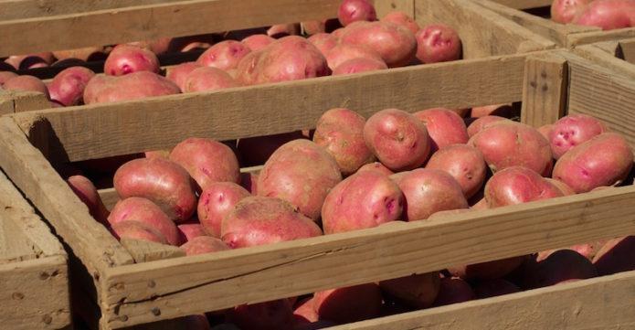 хранение картофеля я деревянных ящиках