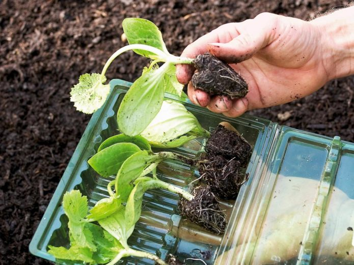 правила выращивания кабачков