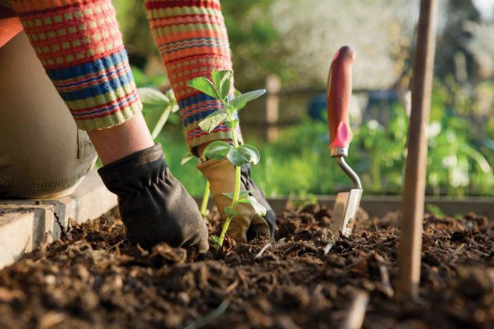 огородные работы в мае