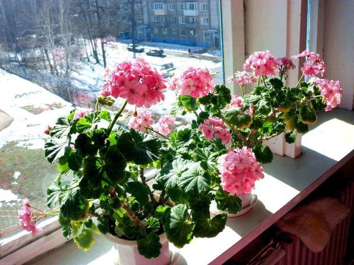 цветы в горшках в декабре