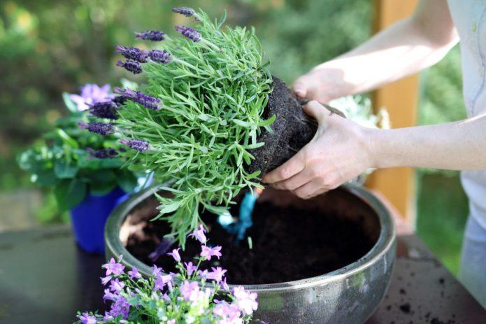 благоприятные дни для работы с домашними растениями