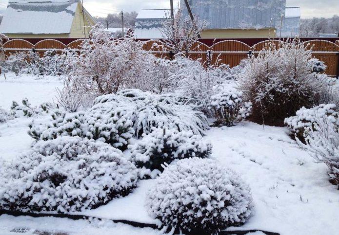 на даче выпал снег