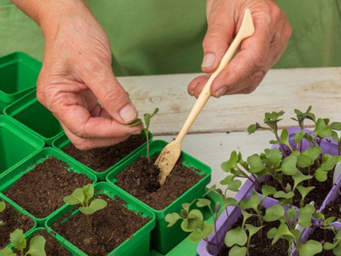 Календарь для садовода-огородника на 2021 год для посадки и ухода за растениями по луне