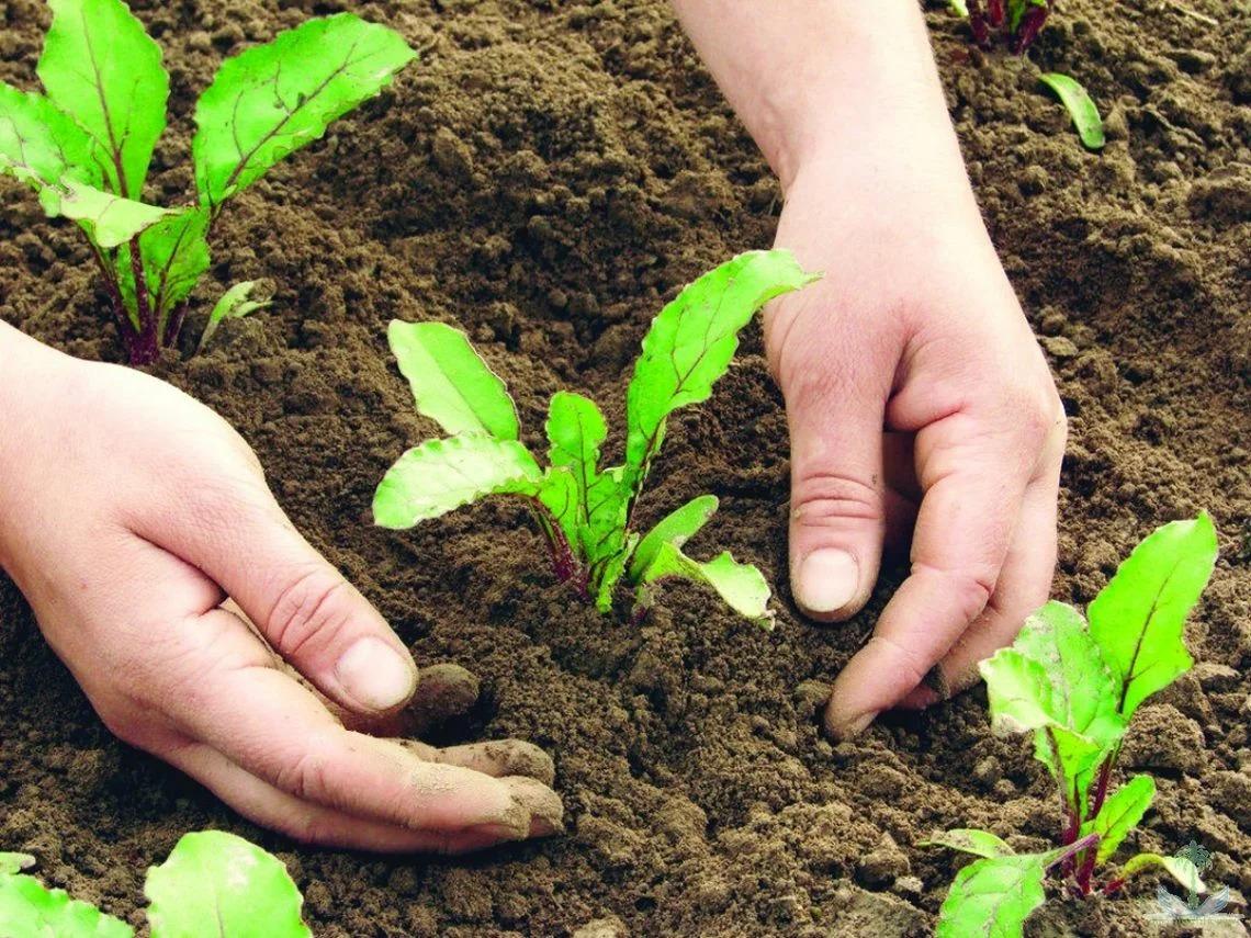 Календарь для садовода-огородника на 2020 год