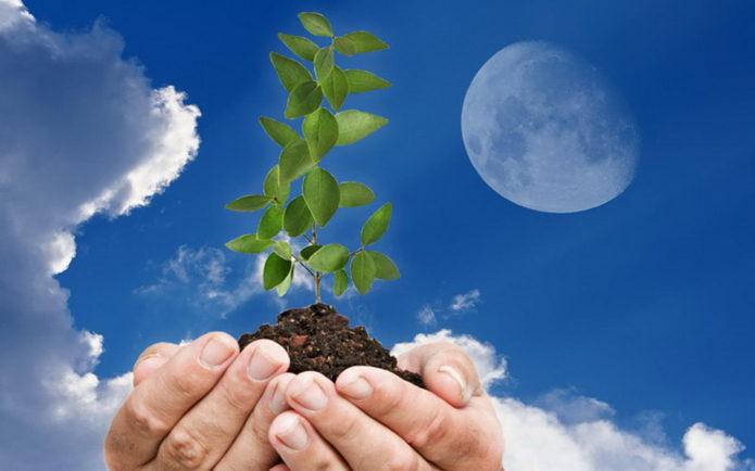 Благоприятные дни для посева овощей и цветов в феврале 2020 года по луне