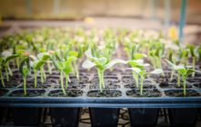 Когда сажать дыни на рассаду в 2020 году по лунному календарю: выбор благоприятных дней для посева семенами и особенности ухода по регионам