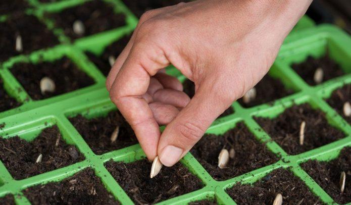 Посев овощей семенами