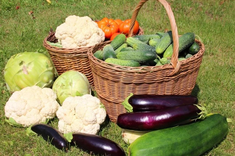 Овощи для огорода в картинках