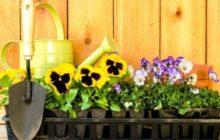 Лунный календарь посадки семян цветов на рассаду