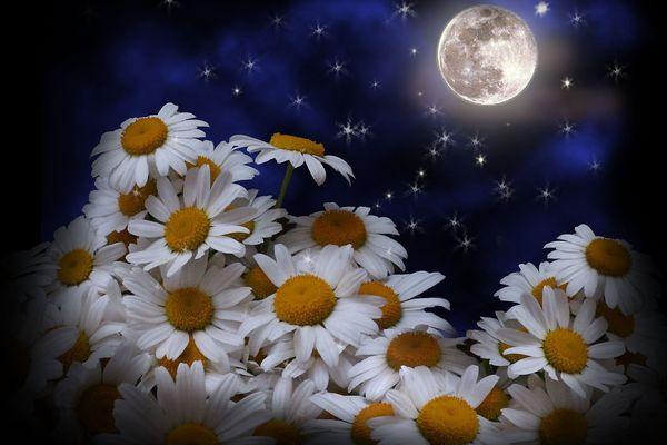 Посадка семян цветов в 2021 году по лунному календарю: таблица благоприятных дней
