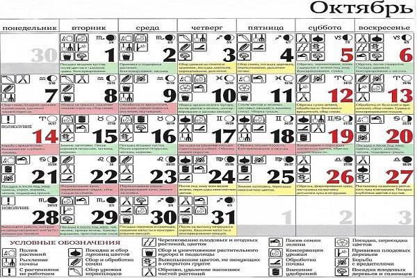 Благоприятные дни в октябре 2021 года по лунному календарю садовода и огородника
