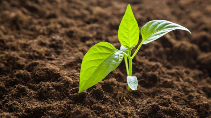 Самые благоприятные дни для посева перца на рассаду в средней полосе в 2021 году