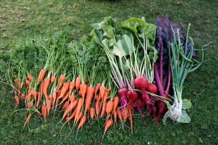 уборка овощей на хранение