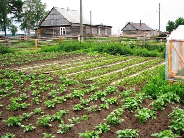 Благоприятные дни для посадки и ухода для западной Сибири на 2021 год