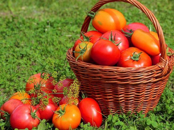 Самые благоприятные дни на 2020 год для посадки томатов в Украине