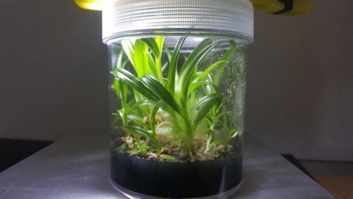 колба с орхидеями