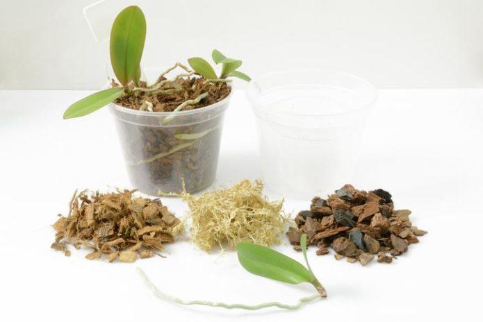 выращивания орхидей