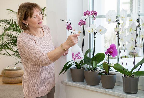 Почему у орхидеи пожелтели листья и как спасти растение