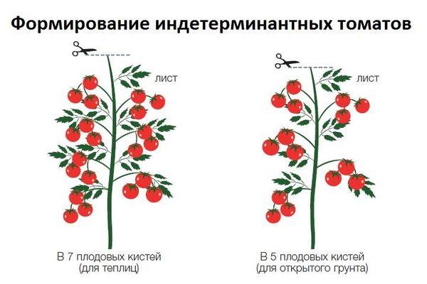 Нужно ли удалять пасынки у томатов и как правильно выполнить пасынкование