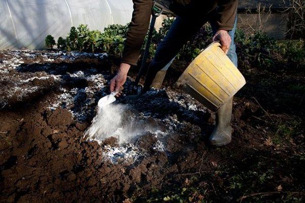 Как правильно используется доломитовая мука в огороде в качестве удобрения