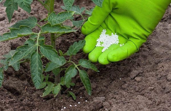 Как используется суперфосфат на участке, свойства средства и польза для растений