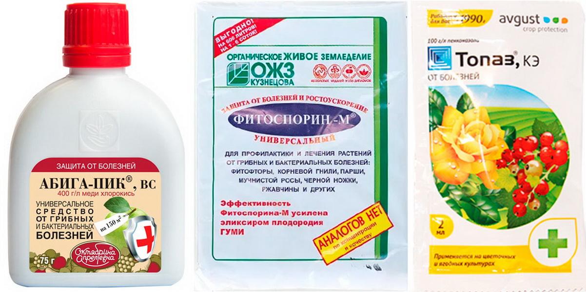 Что такое фитоспорин, состав препарата, цели применения и особенности обработки