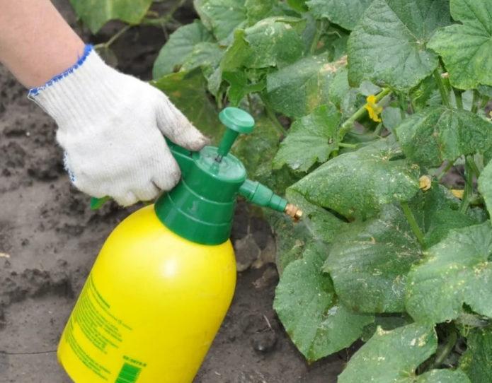 Что дает доломитовая мука и как правильно использовать удобрение в саду и на огороде
