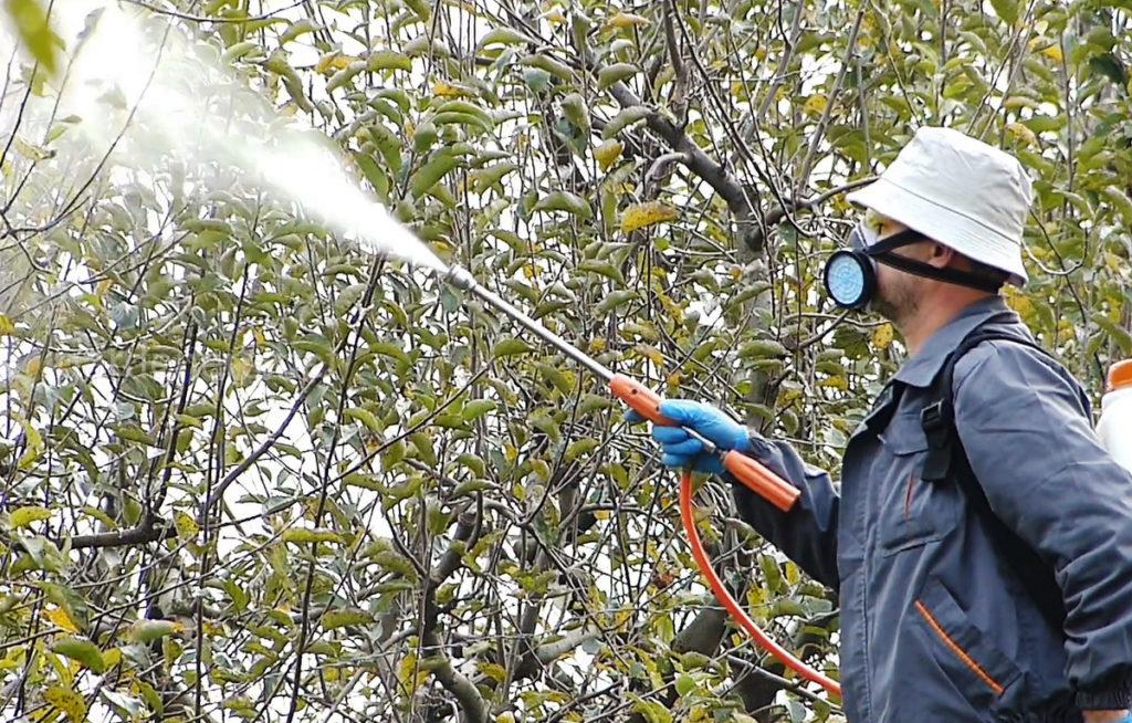 Польза нашатырного спирта для сада и огорода и правила приготовления раствора