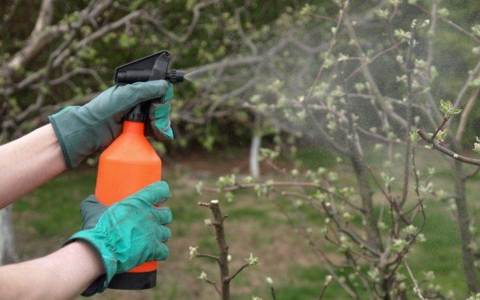 Что такое железный купорос, как применяется состав для обработки деревьев и кустарников