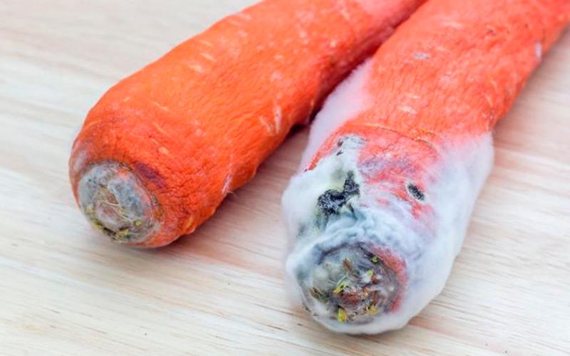 Как определить заболевания моркови и способы борьбы с ними