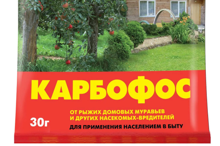 Как бороться с тлей на помидорах в домашних условиях
