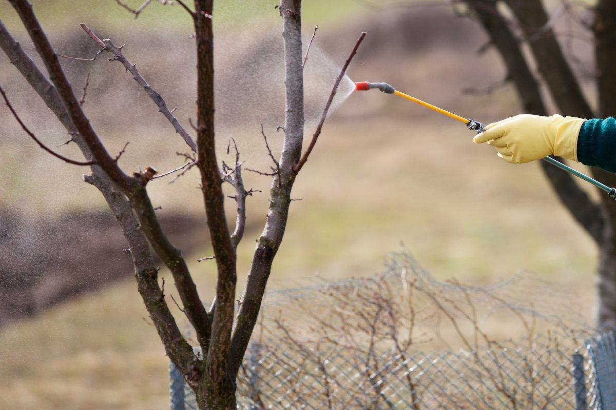 Как избавиться от парши на яблоне