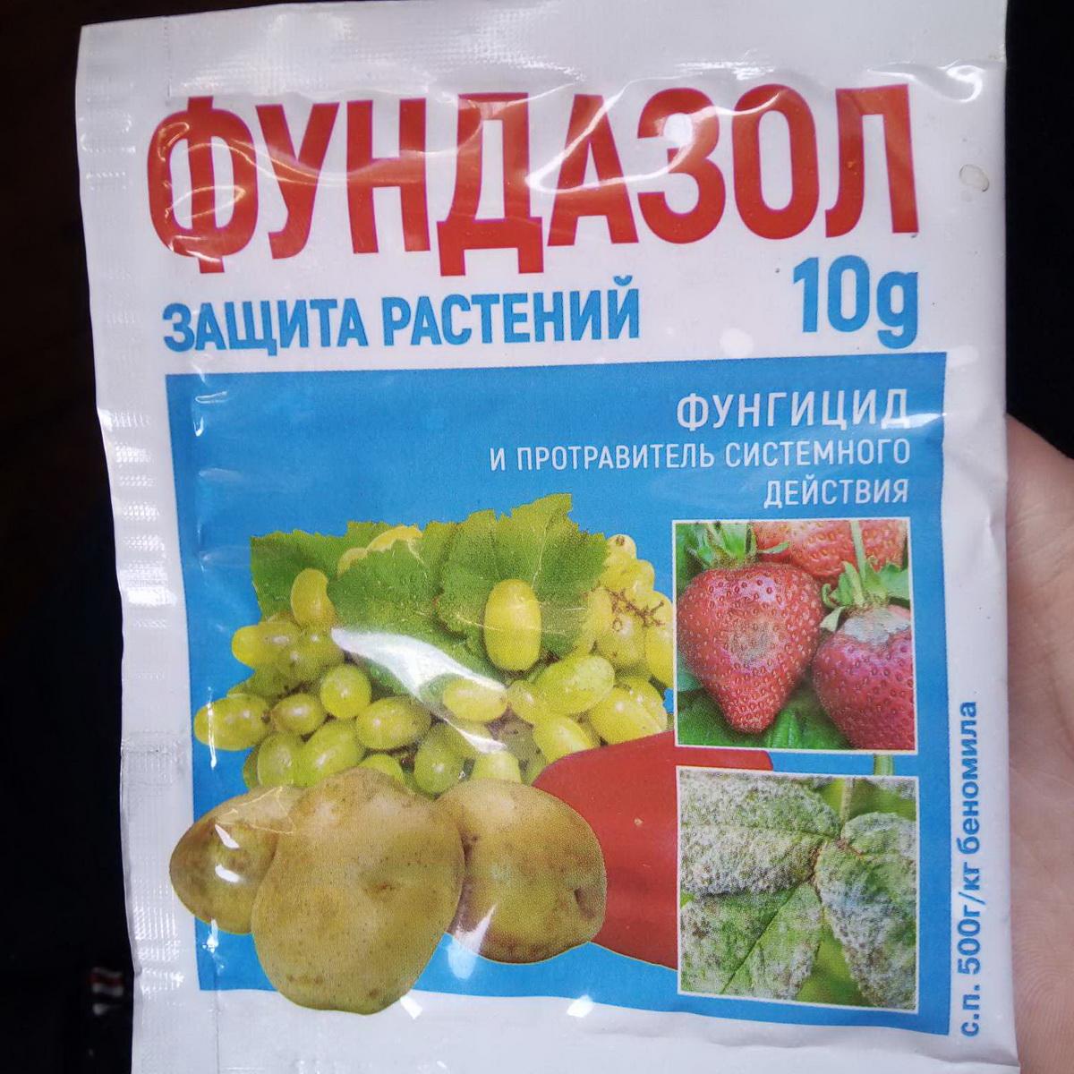 Чем и как лечить фузариозное увядание томатов